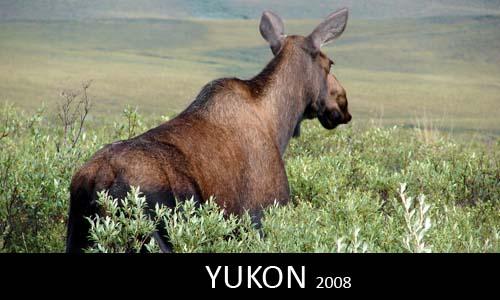 Yukon 2008